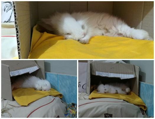 BiDob-Sleep-Pose