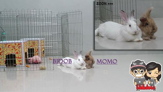 Kisah-Kelinci-Berawal-Dari-Momo